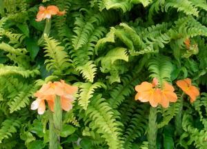 huis-flower