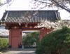 Sakuraakamon07
