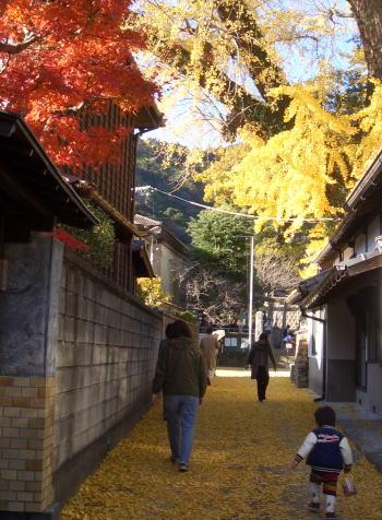Ochibahiroi2dec07