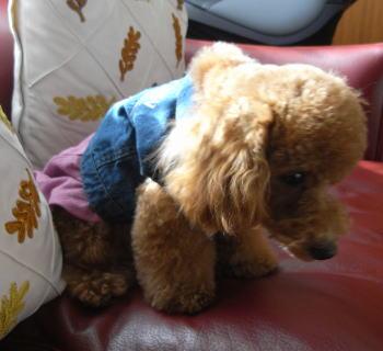 Tireddog08march