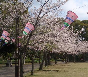 Sakuralantern208