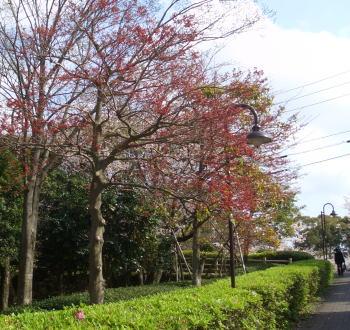 Sakuraparkway08