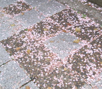 Sakurapavement08