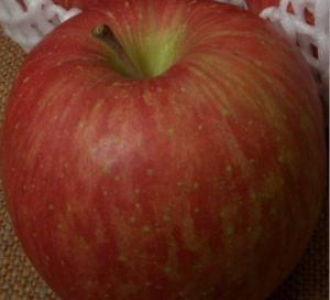 Apple2006nov