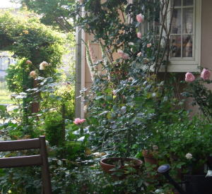 Garden06may21