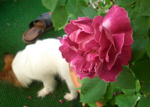 Rosedog06may20