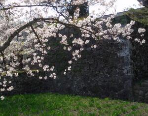 Sakuraishigaki07