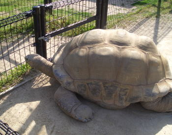 Turtle2may1307