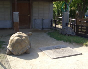 Turtle3may1307